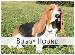 Buggy Hound