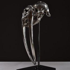 1JA16011 Walrus Skull For Sale (1)